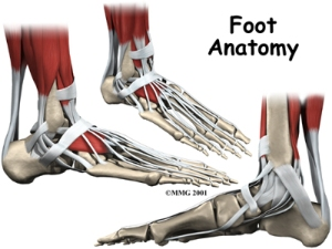 foot_anatomy_intro01