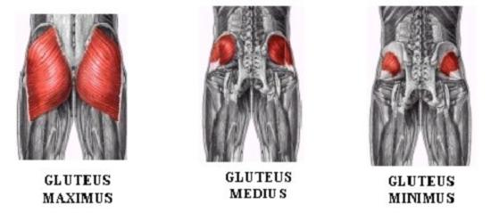 glutes (1)